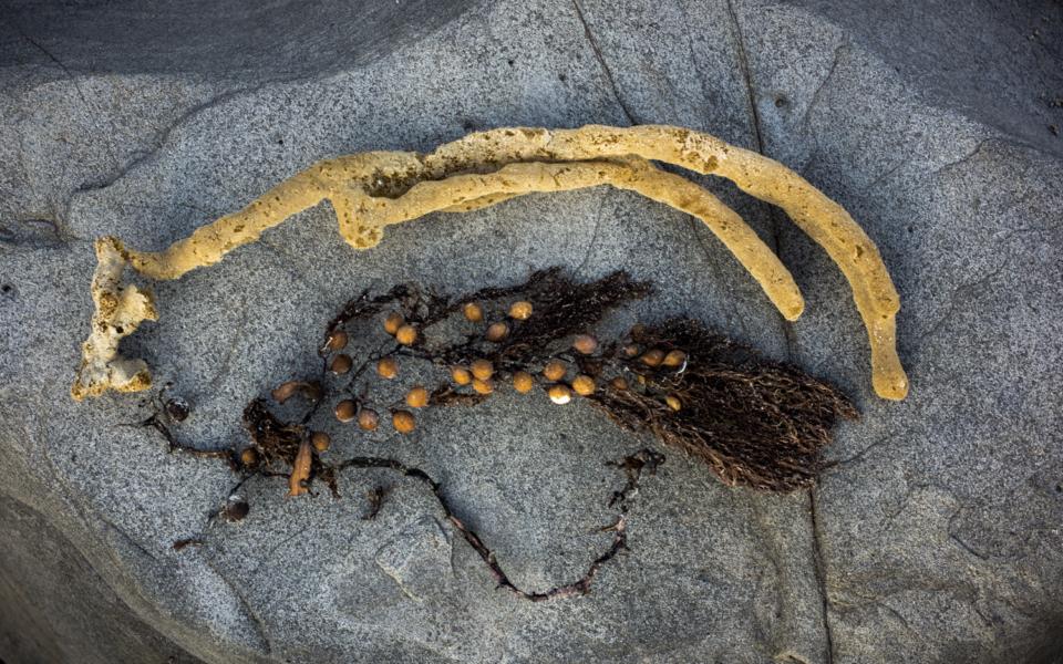 seaweed still life