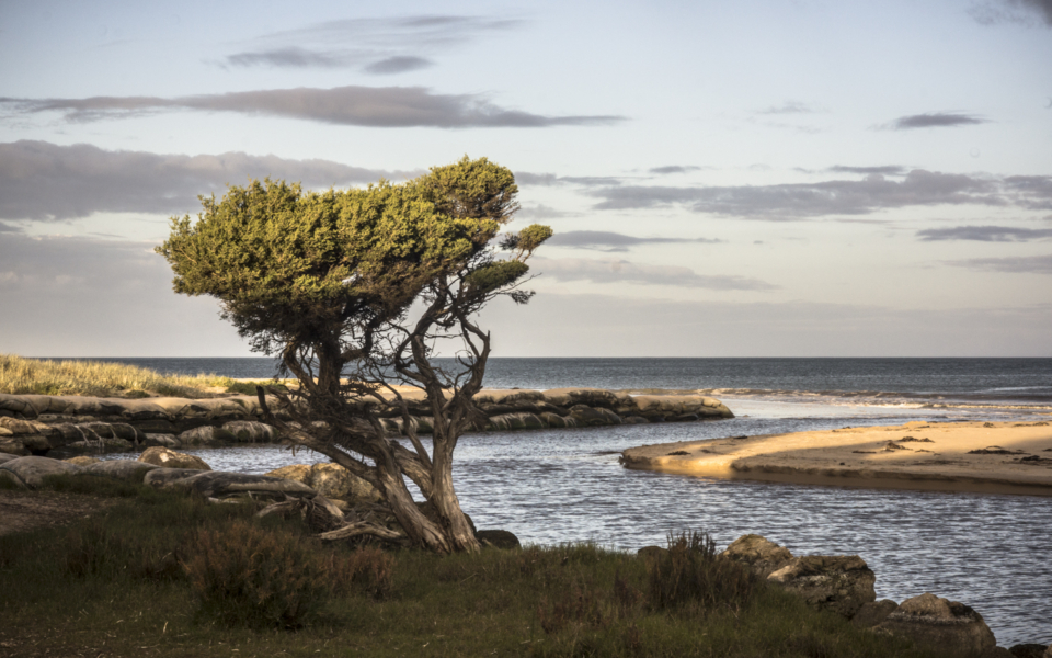 Mouth of Hindmarsh River