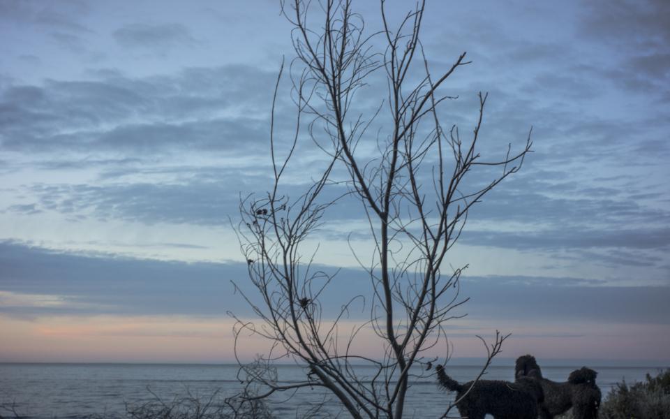 dawn, Haybourough