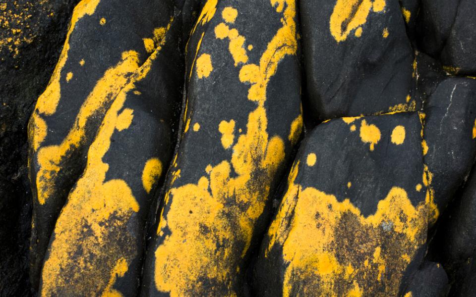 granite + yellow lichen