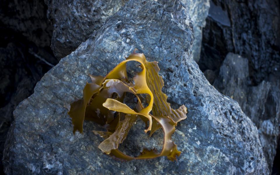 seaweed + blue rock