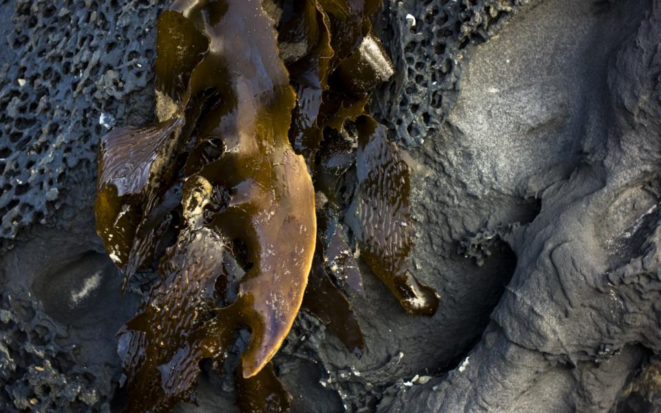 seaweed+granite